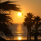 Sunset and Palm Trees over Pacific Ocean
